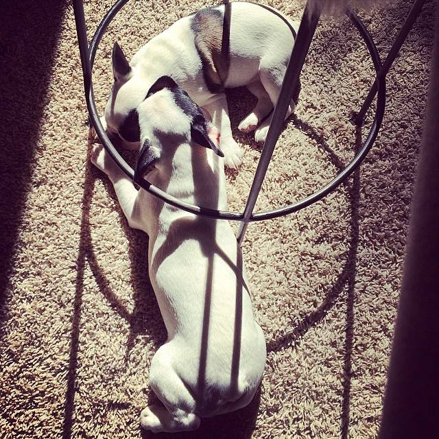 puppies under the stool