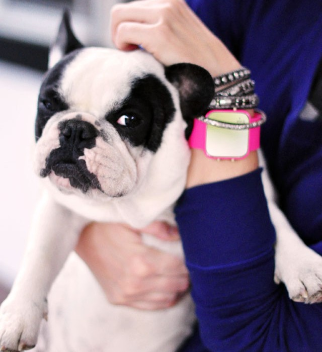 1Face watch for a cause-frenchie
