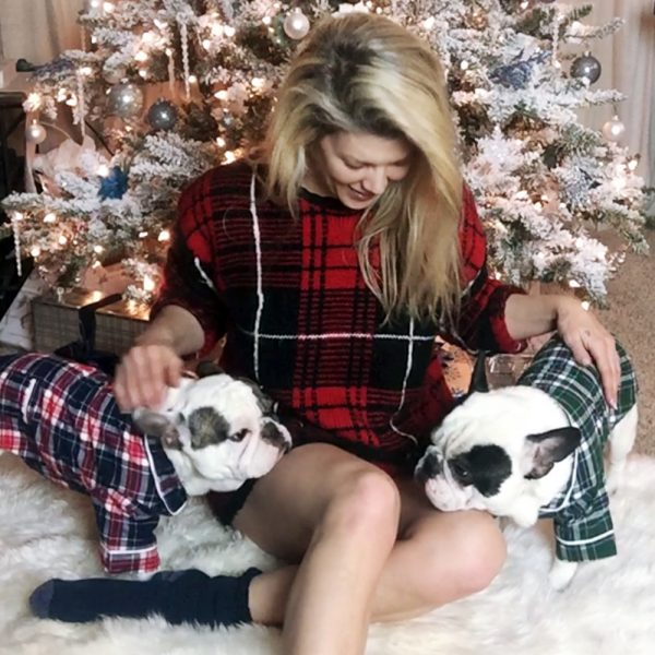 Christmas french bulldogs