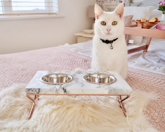 diy marble and copper pet feeding table dishes
