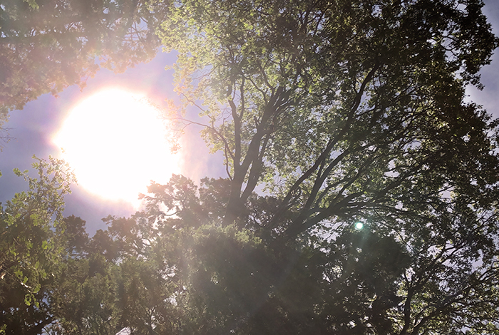 trees-looking up-leaves in the sky-sun