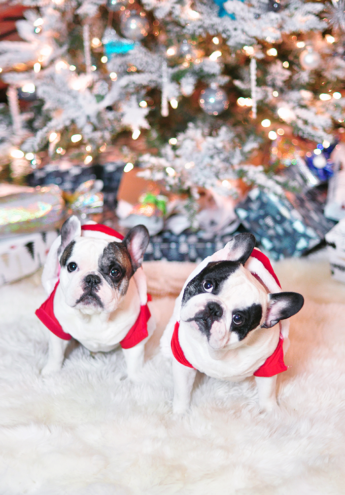 merry christmas frenchies