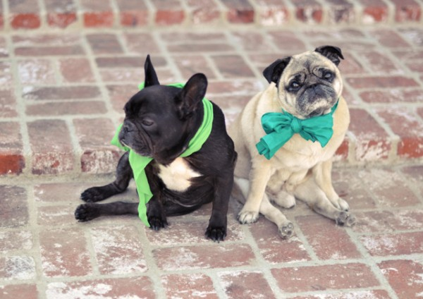 Frenchie and Pug | St. Patrick's Day dogs