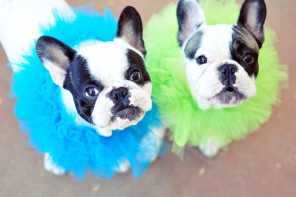 DIY Elizabethan Ruffle Clown Collars for Your Pets
