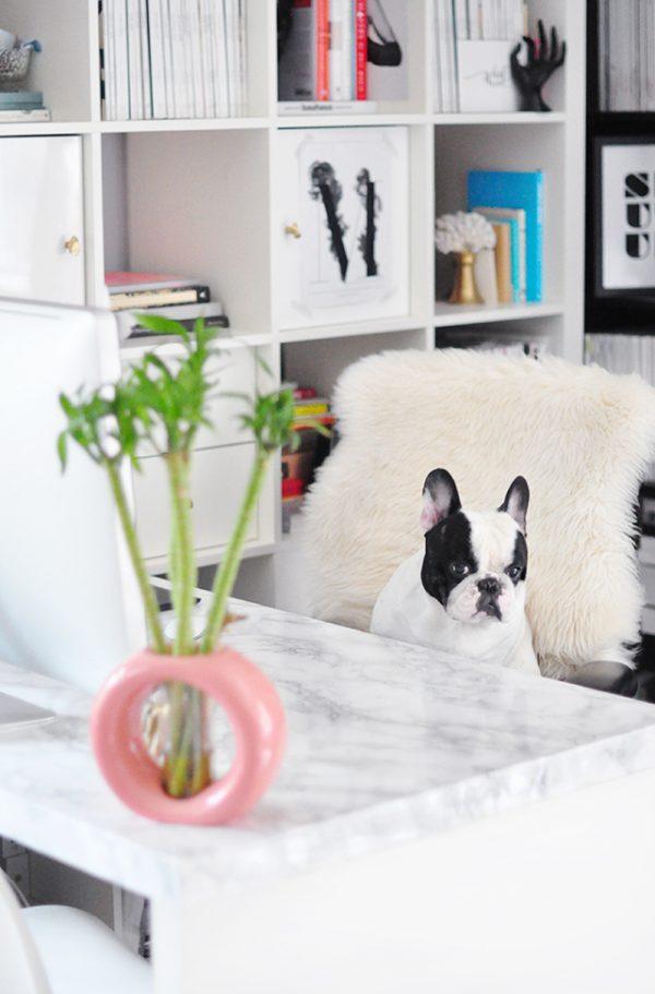 DIY Faux Marble Desk_marble desktop _french bulldog