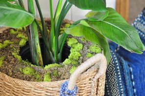 DIY Moss Potted Plant Cover