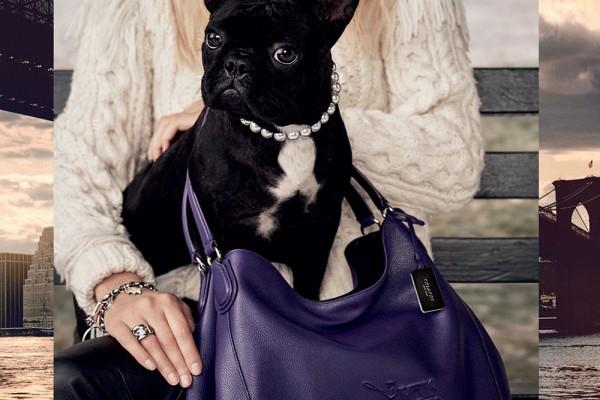 Frenchie_Coach_Lady Gaga