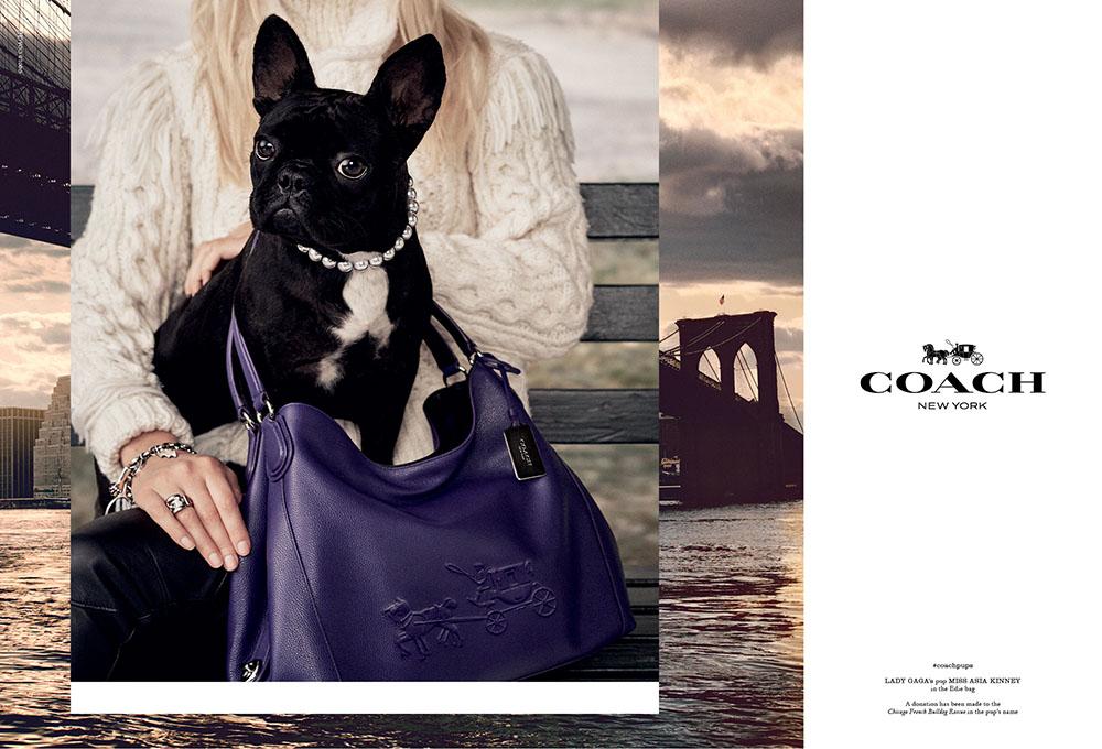 Fashion week Gagas lady dog coach for girls