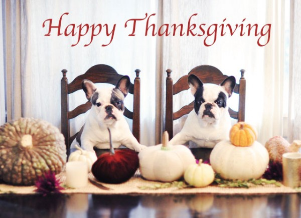 Happy Thanksgiving ~ Dogs at the dinner table