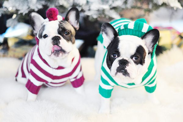 ig-dogs-in-holiday-sweaters
