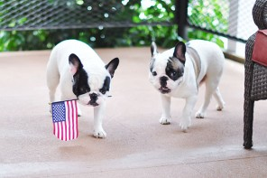 These Patriotic Pups Are Wishing YOU A Happy 4th of July!