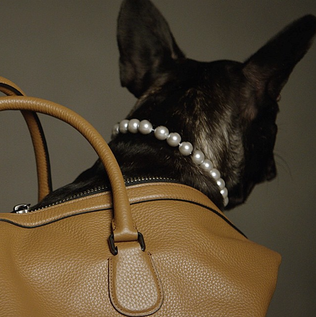Coach Pups French Bulldog