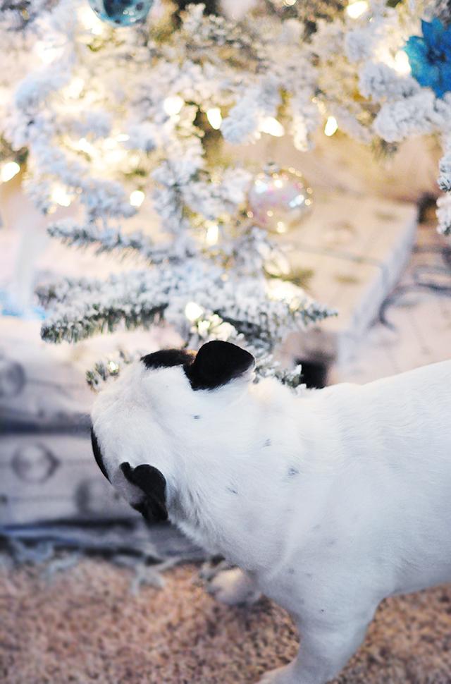 Trevor sniffing the tree