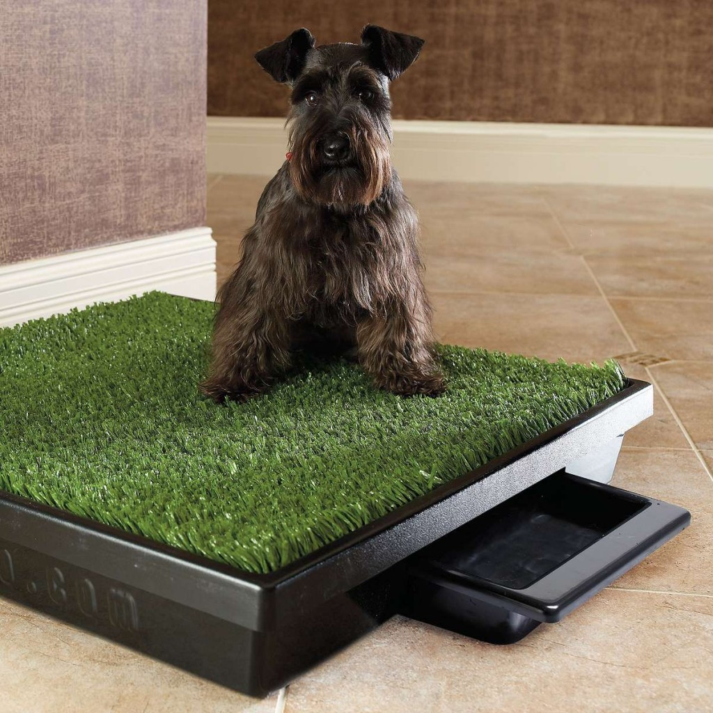 Beautiful Patio Potty For Dogs Modern