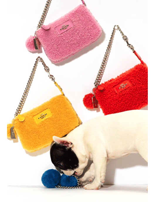 cute frenchie pup_coach bags