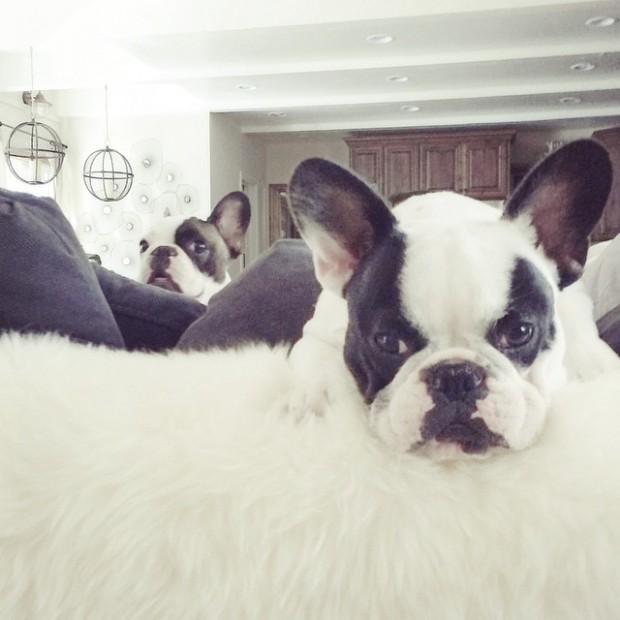 dog photobomb-frenchie brothers