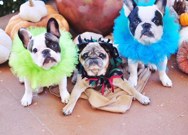 dogs on halloween