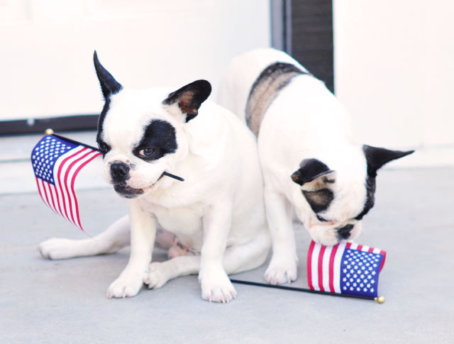 dogs with us flags