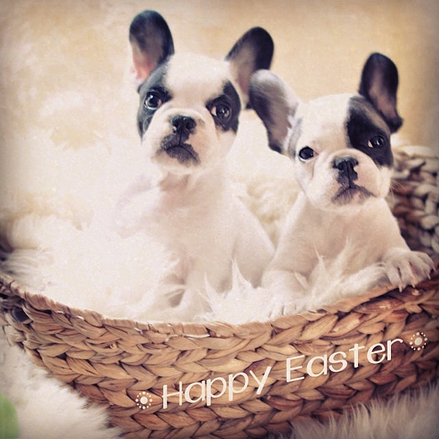 easter puppies in a basket