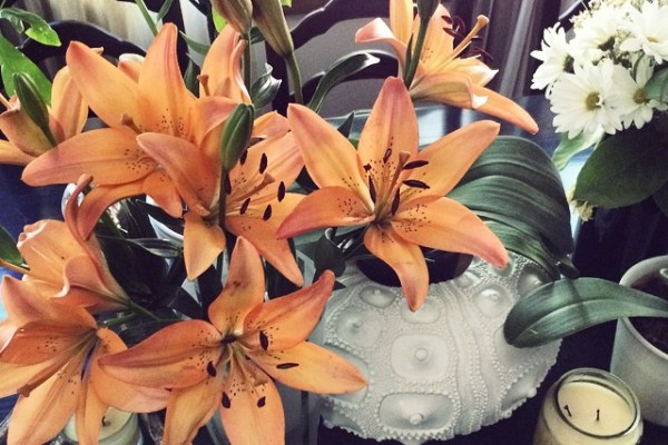 fall lilies