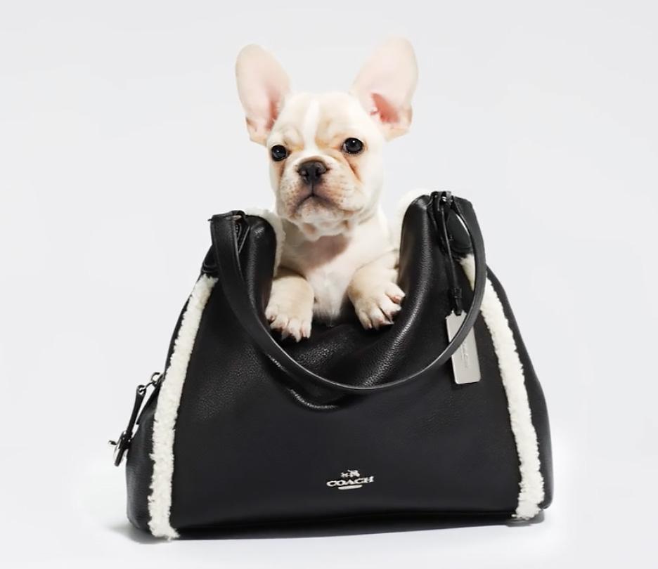 french bulldog in handbag