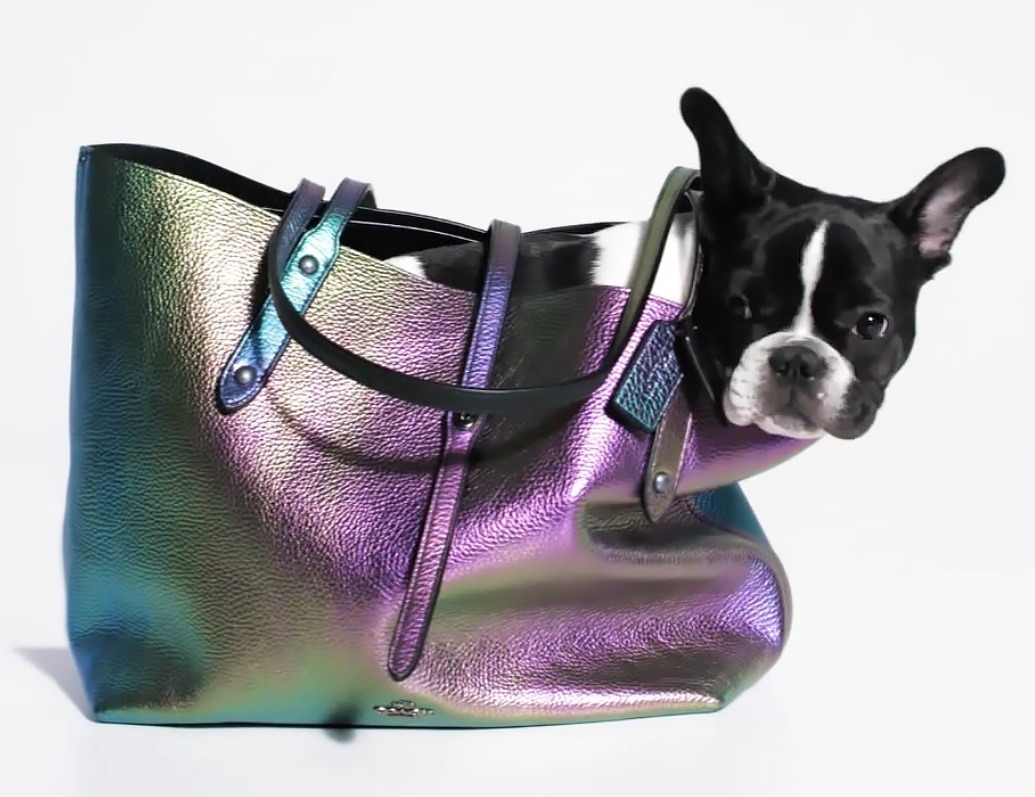 french bulldog pup in handbag