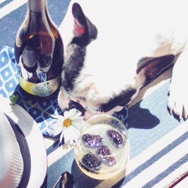 french bulldog_ecco prosecco cocktail