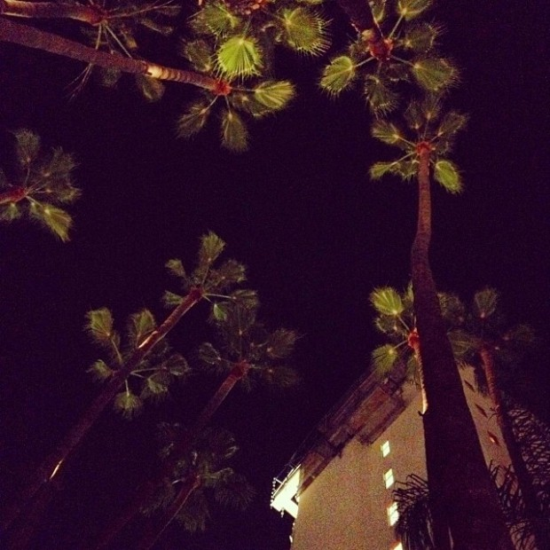 palm trees looking up