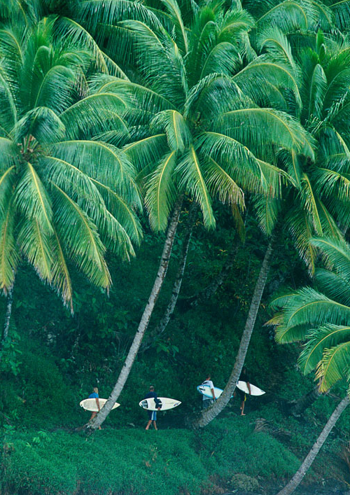 palms_surfers