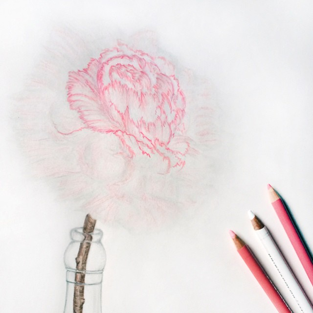 pencil and colored pencil drawing of a flower