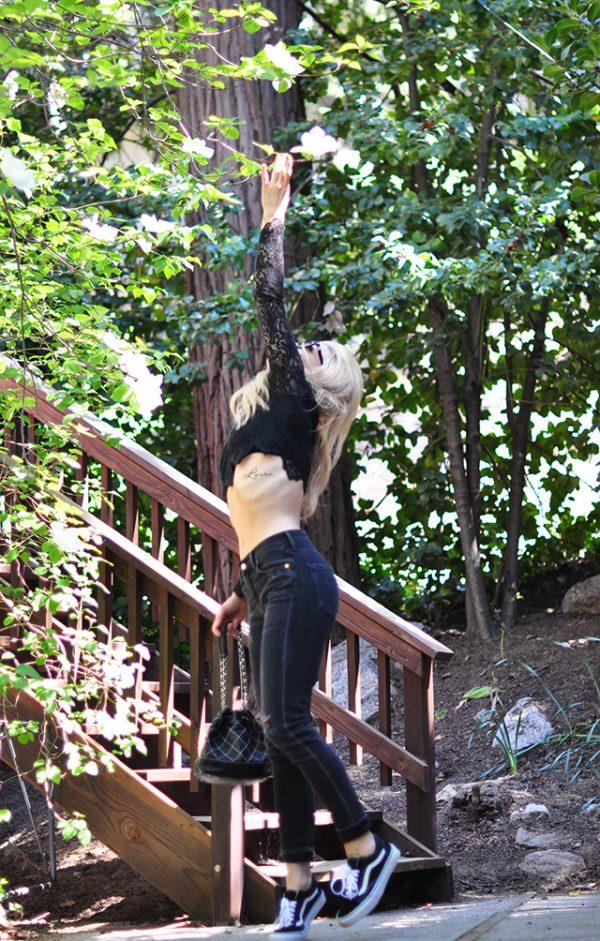 picking dowgwood tree flowers