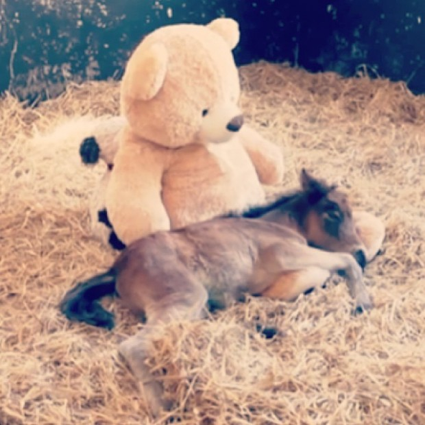 pony and bear