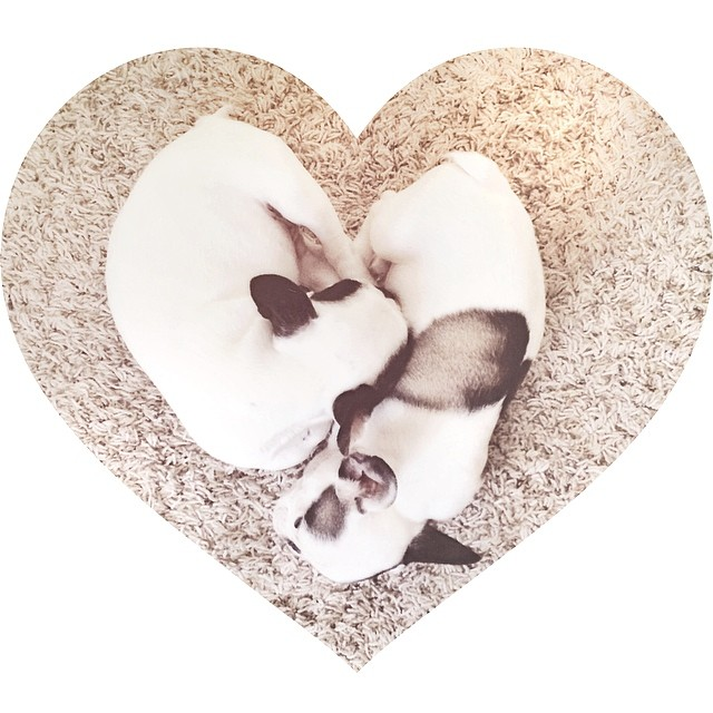 puppies make a heart