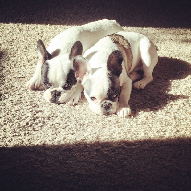 puppy brothers in the sun