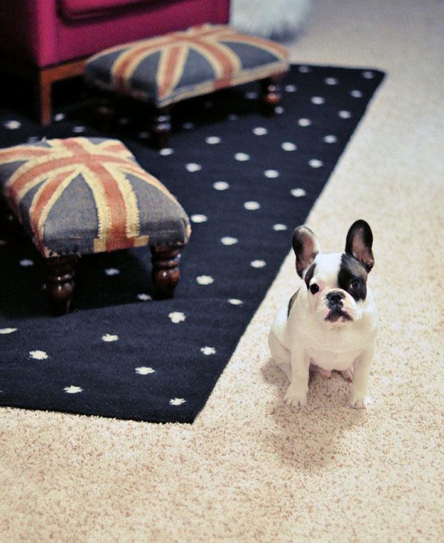 randy+ new rug in the hallway