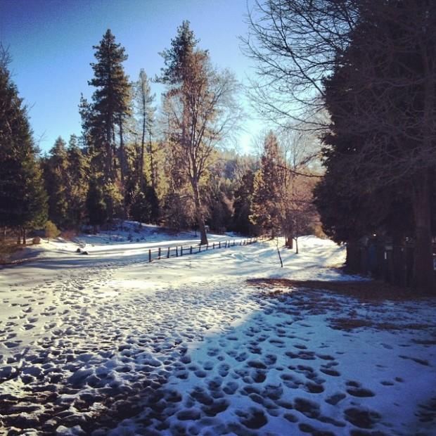 snowy winter wonderland