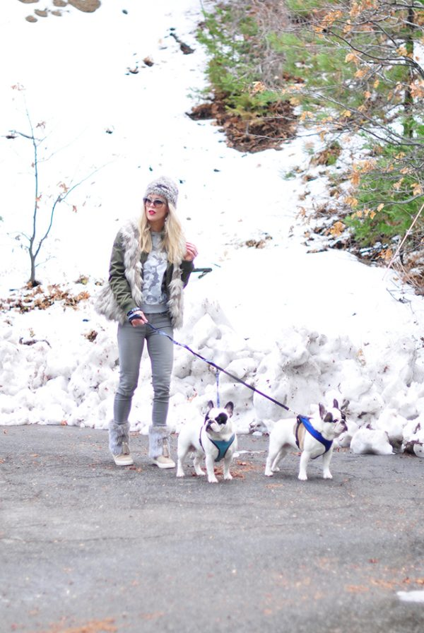style-in-the-snow_with-french-bulldogs