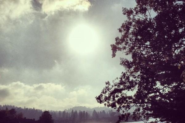 sun lake trees