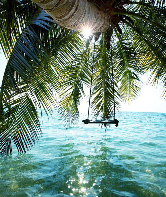 Summer dreams swings from trees over water love maegan for Swing over water
