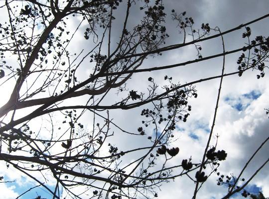 trees skies