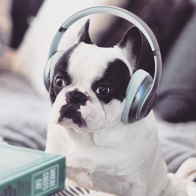 trevor beats by dre headphones