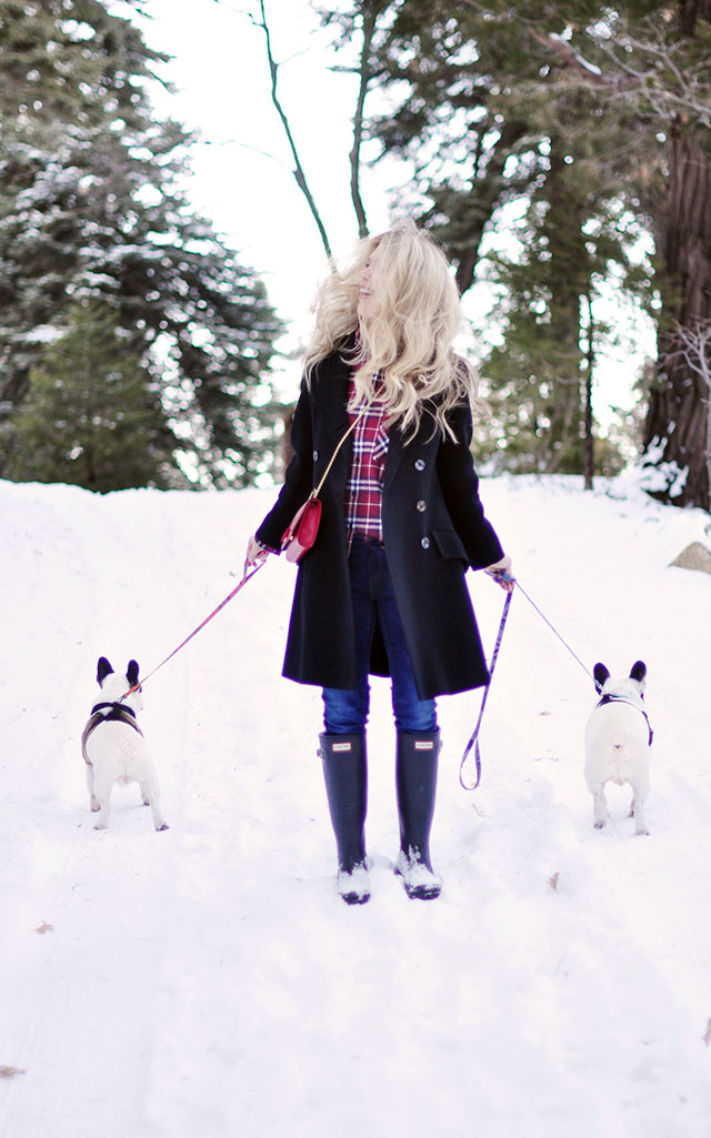 walking the dogs in the snow-