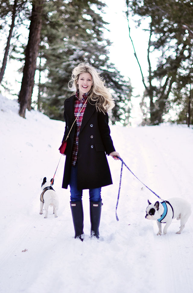 walking the french bulldogs in the snow